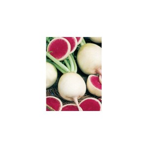 ridichi-de-iarna-pepene